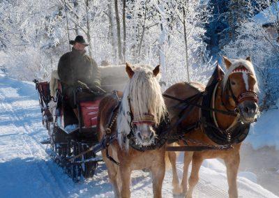WinterPferdeschlitten
